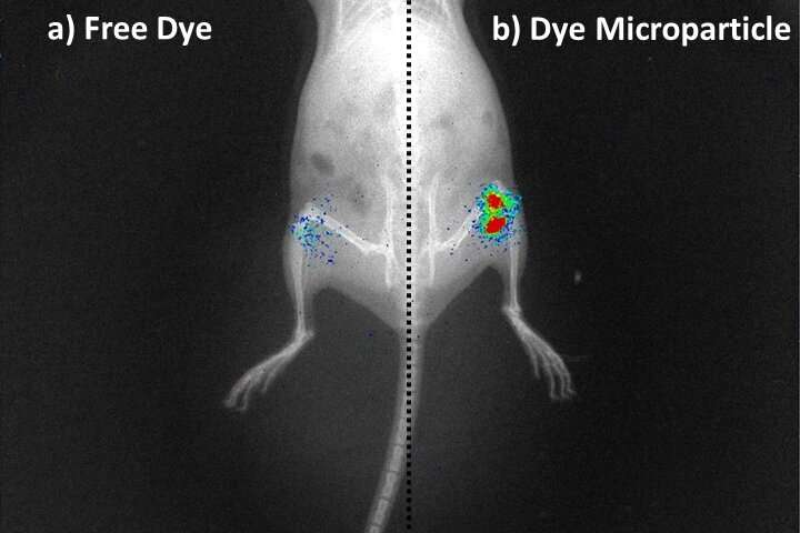 A step closer towards a more effective treatment for osteoarthritis