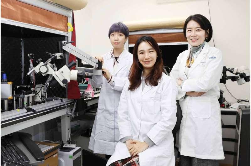 A study finds neuropeptide somatostatin enhances visual processing