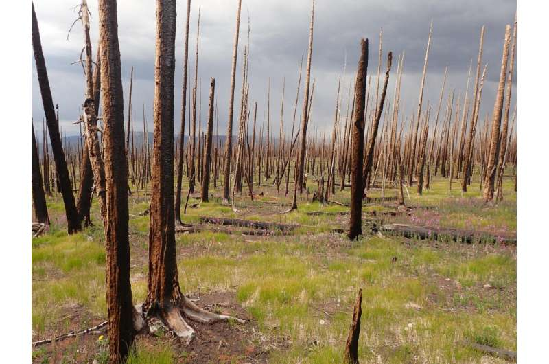 As wildfires flare up across West, research highlights risk of ecological change
