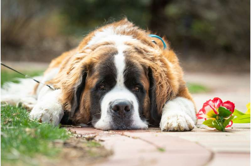 A tangled web: Teasing out the effects of CBD on canine seizures