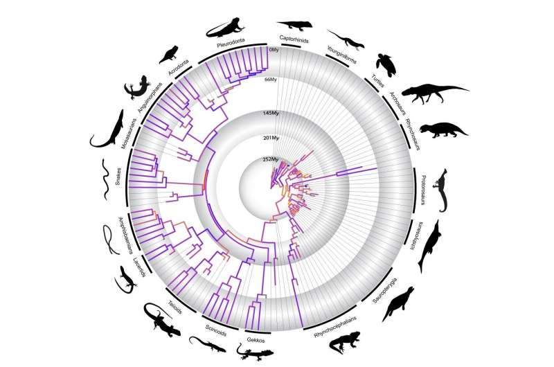 A timeline on the evolution of reptiles