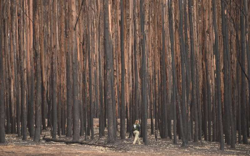 At least 33 people have died and vast swathes of the country have been burned since September