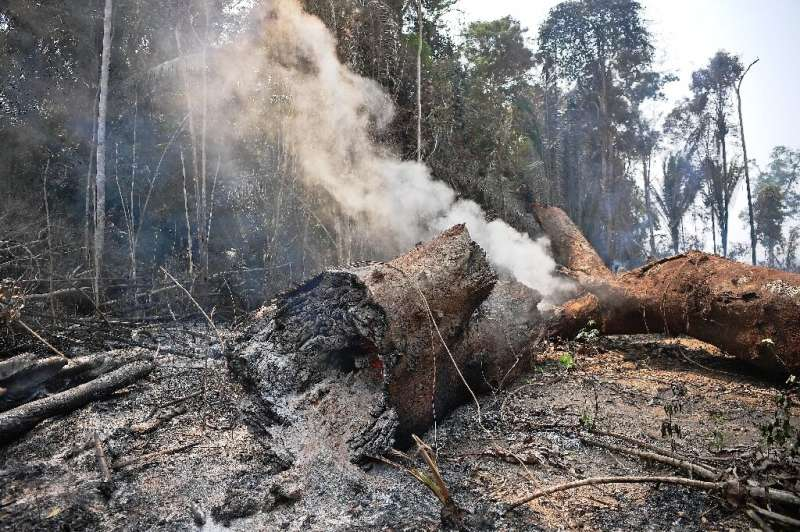 A tree trunk burns during a forest fire near Porto Velho, in the Amazon basin in west-central Brazil in Augurst 2019