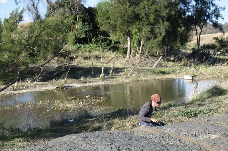 Australian fossil reveals new plant species