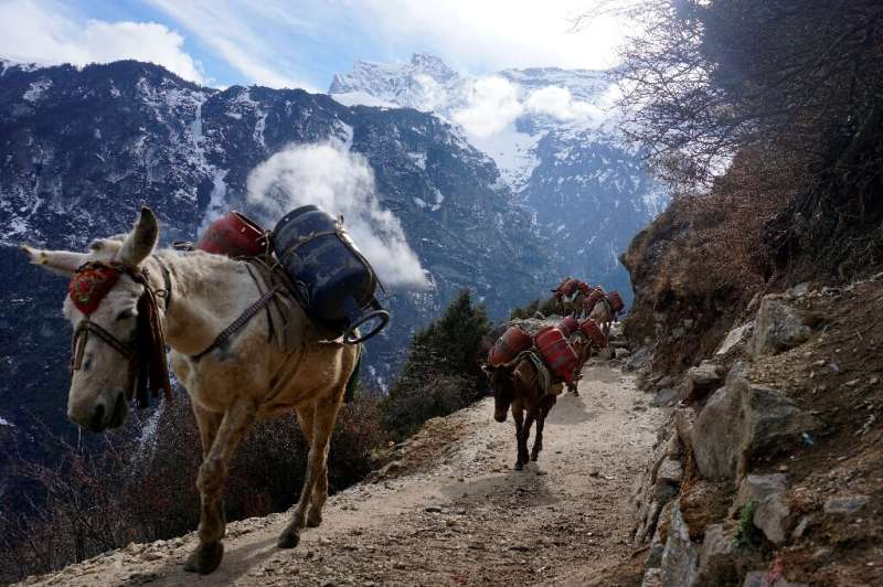 Authorities last month suspended permits for all mountain expeditions over the coronavirus outbreak, forcing the Nepal army to c