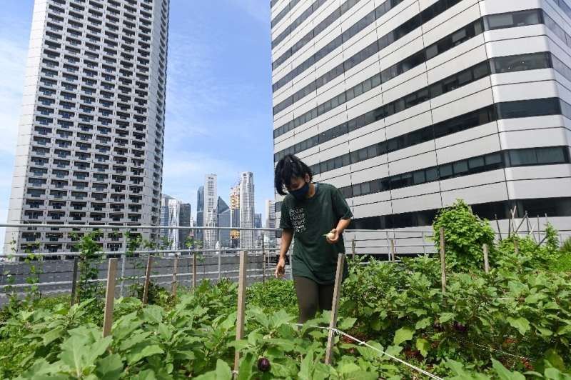 A worker tends to a rooftop farming patch atop the Raffles City mall in Singapore