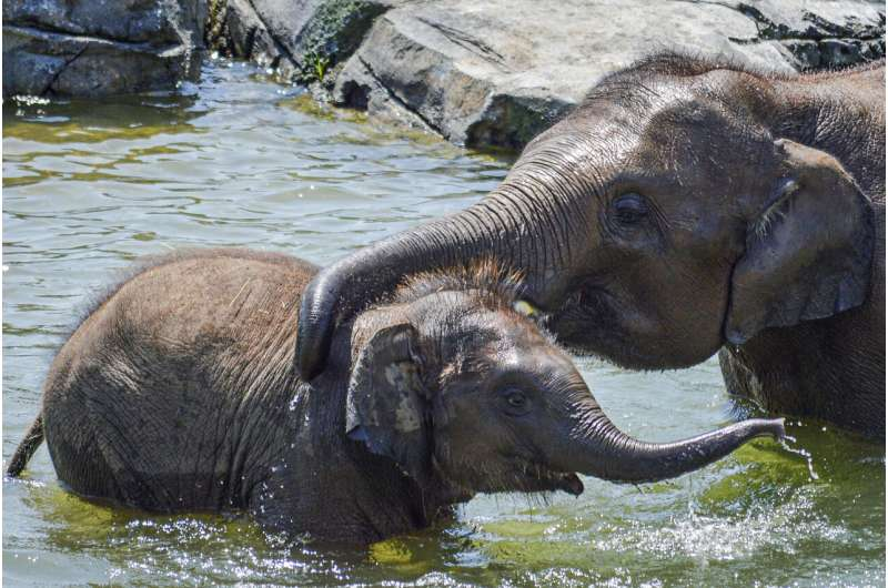 Baby elephant dies suddenly, just before 2nd birthday