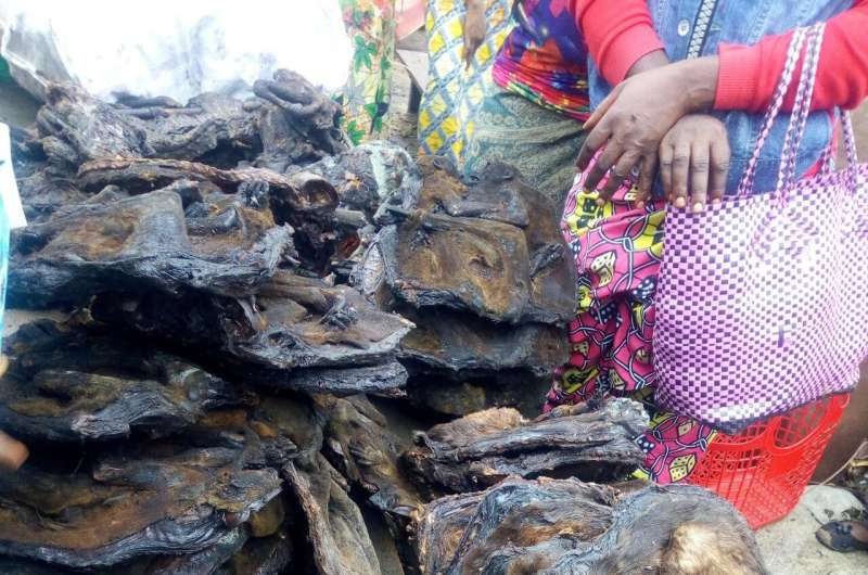 Balancing bushmeat trade and conservation vital to ensure livelihoods not threatened