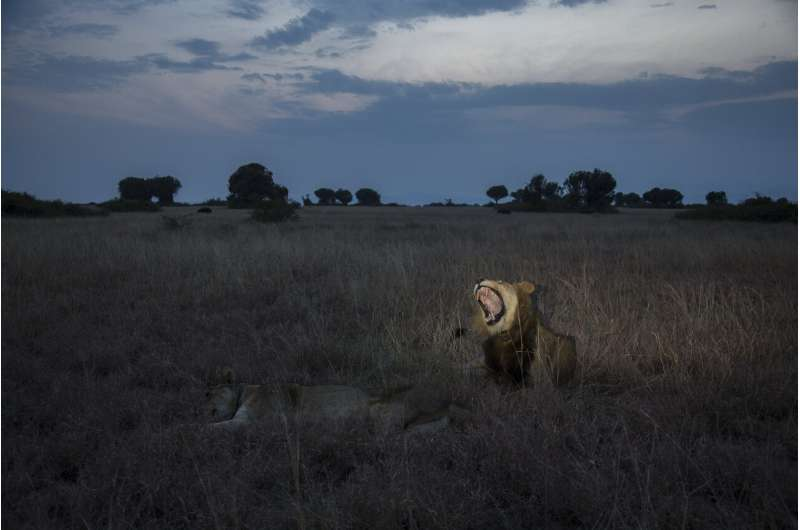 Banning trophy hunting amid COVID-19 threatens African wildlife and livelihoods