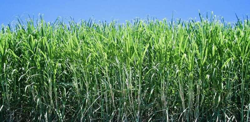 Ban on toxic mercury looms in sugar cane farming, but Australia still has a way to go
