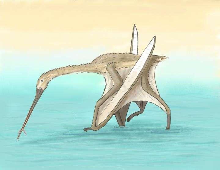 Beak bone reveals pterosaur like no other