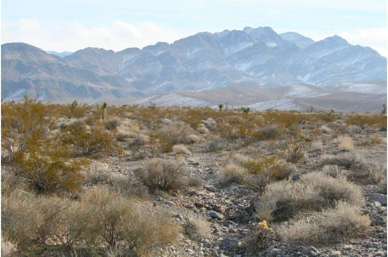 'Big data' enables first census of desert shrub