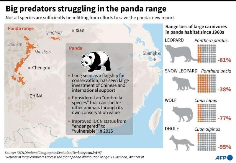 Big predators struggling in the panda range
