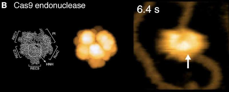 BioAFMviewer software for simulated atomic force microscopy of biomolecules