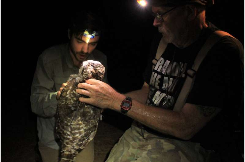 Biologists recommend urgent action to protect California spotted owls