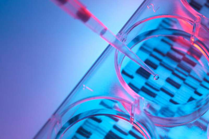 Biologist uses genome database to investigate cancer cells