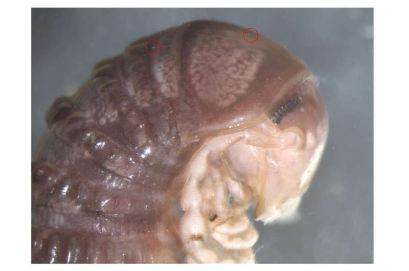 Bizarre new species discovered... on Twitter
