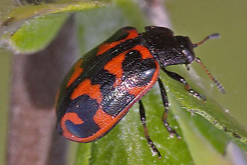 Book on plants in the Murmansk region (Russia) scores 4/19 correct insect identifications