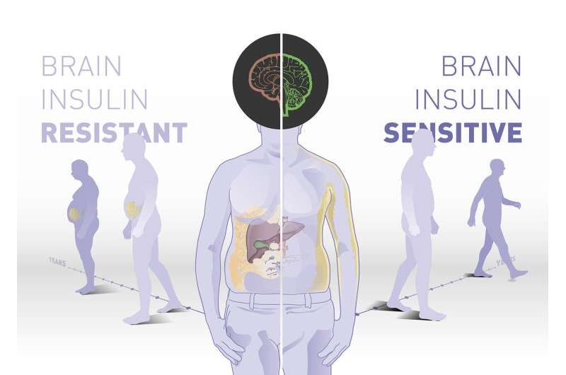 Brain insulin sensitivity determines body weight and fat distribution