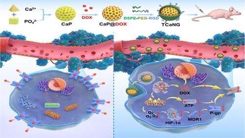Calcium bursts kill drug-resistant tumor cells