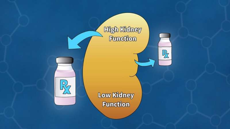 Calibrating kidney function for cancer patients