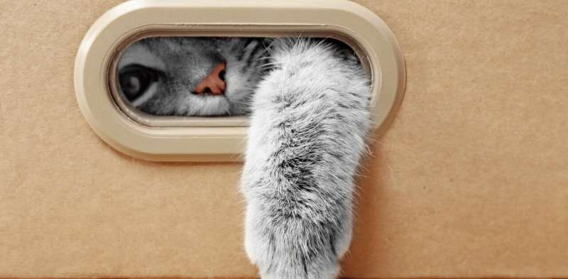 Can cats really get or pass on COVID-19, as a report from Belgium suggests?