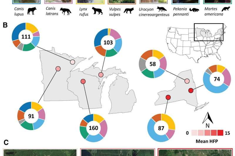 Carnivores living near people feast on human food, threatening ecosystems
