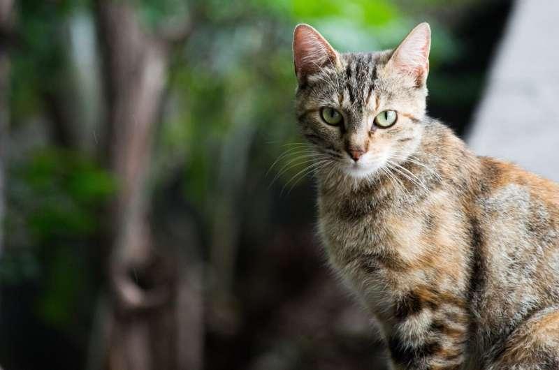 Cat diseases have $6 billion impact on human health in Australia