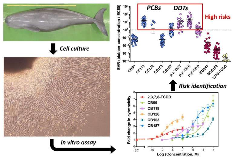 Cell death in porpoises caused by environmental pollutants