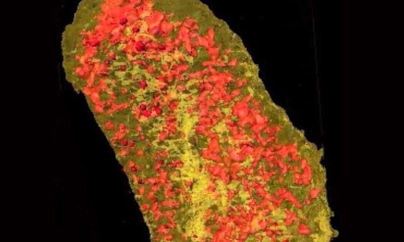 Cell membrane proteins imaged in 3-D