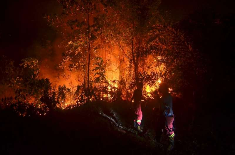 Central Kalimantan on Borneo island was ravaged last year by fires blamed for blanketing swathes of Southeast Asia in toxic haze