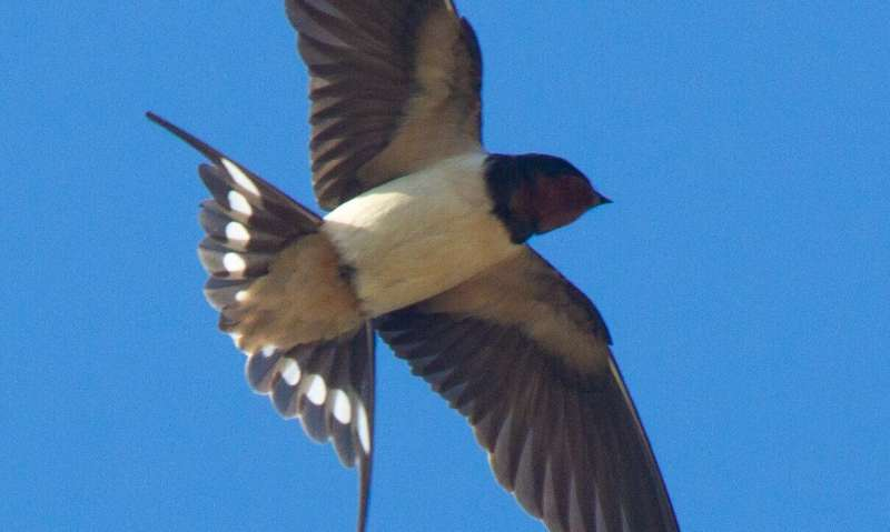 Changes in climate and land cover affecting European migratory bird populations