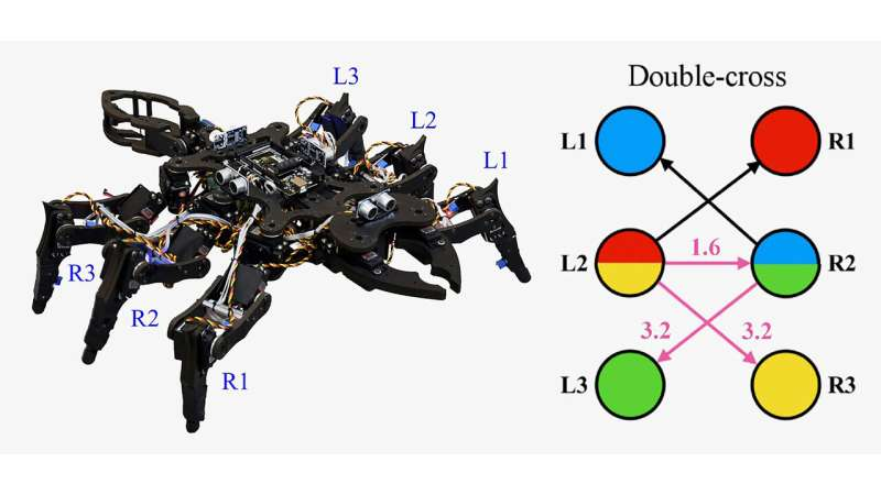 'Chaotic' way to create insectlike gaits for robots