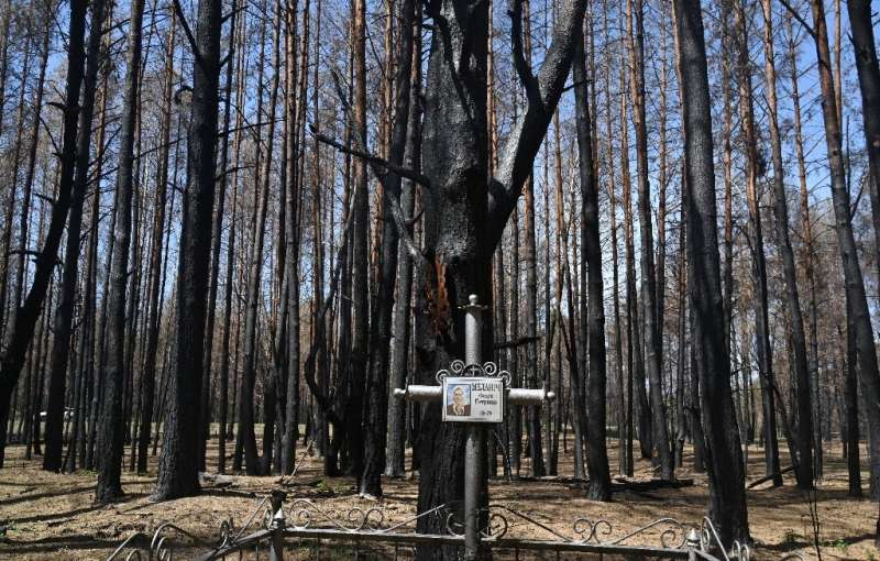 Charred trees loom over a grave at the cemetery near Rozsokha inside the Chernobyl exclusion zone following the worst fire since