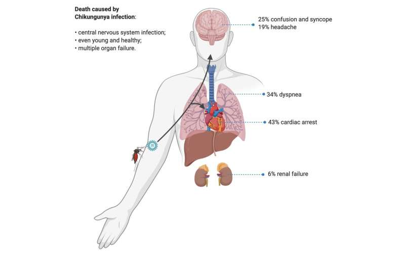 Chikungunya may affect central nervous system as well as joints and lungs