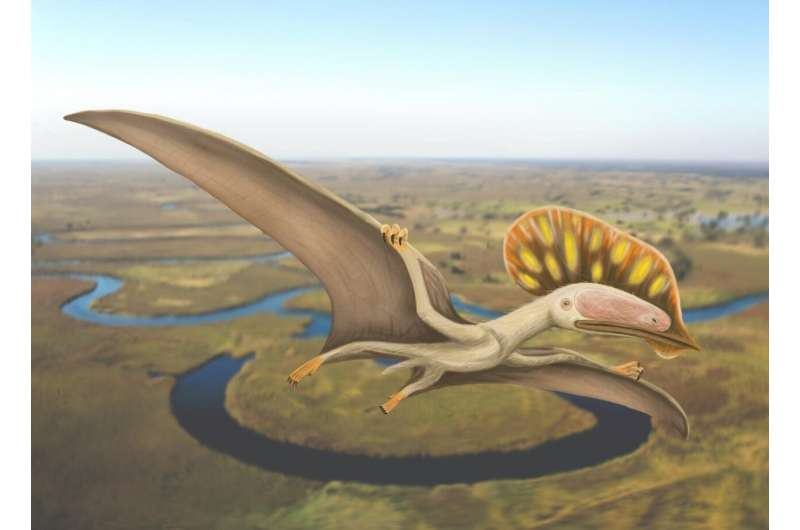 Chinese pterodactyl wings its way to the United Kingdom