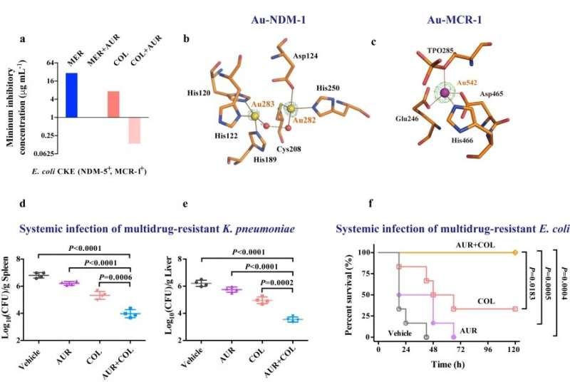 "cientists reveal an antirheumatic metallodrug can resurrect ""last-resort"" antibiotics to kill multi-drug resistant superbugs"