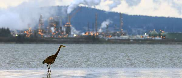 Clean Air Act saved 1.5 billion birds, study shows
