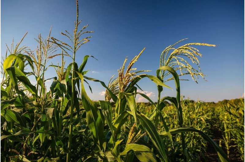 Climate-adapted plant breeding