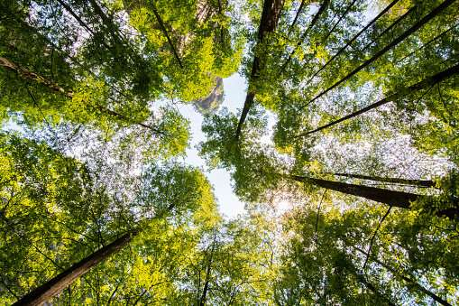 Climate warming disrupts tree seed production