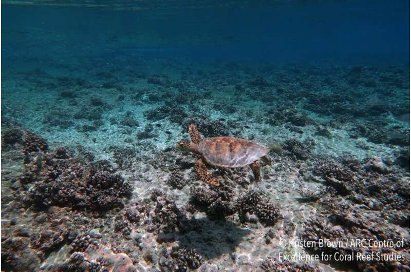Coasts drown as coral reefs collapse under warming and acidification