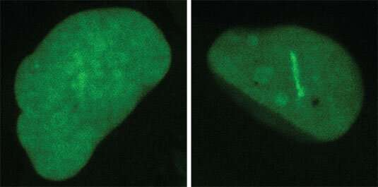 Coaxing cancer cells to commit suicide