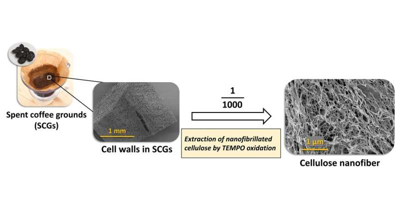Coffee grounds show promise as wood substitute in producing cellulose nanofibers