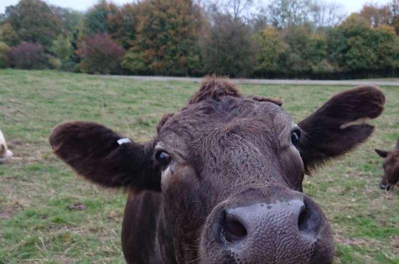 Common anti-parasite treatments used on cattle have devastating impacts on wildlife