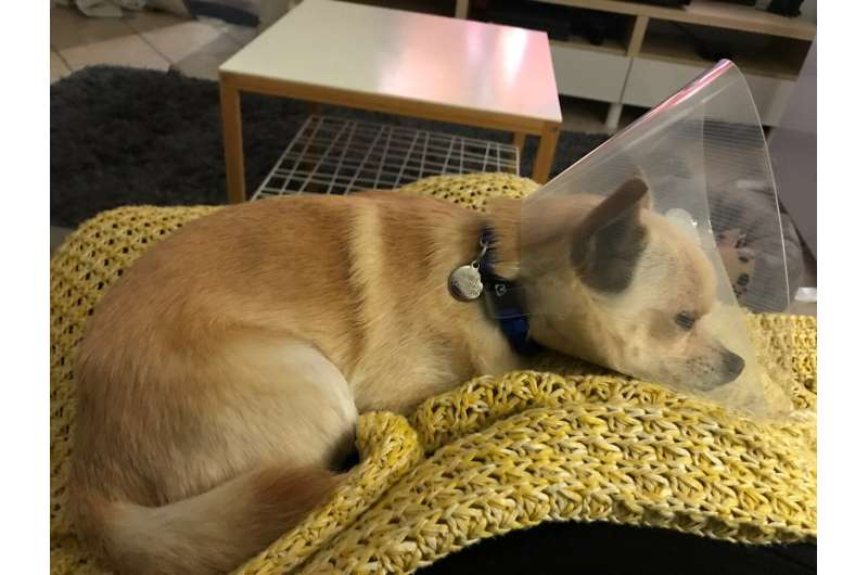 Cone of Shame makes pets miserable