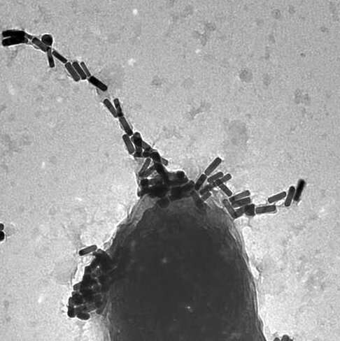 Controlled phage therapy can target drug-resistant bacteria while sidestepping potential unintended consequences