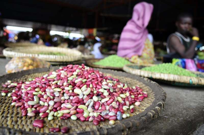 Cool beans: A vertical crop fit for Africa's changing climate and nutritional gaps