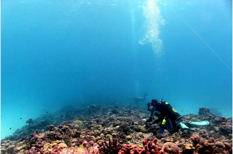 Coral recovery during a prolonged heatwave offers new hope