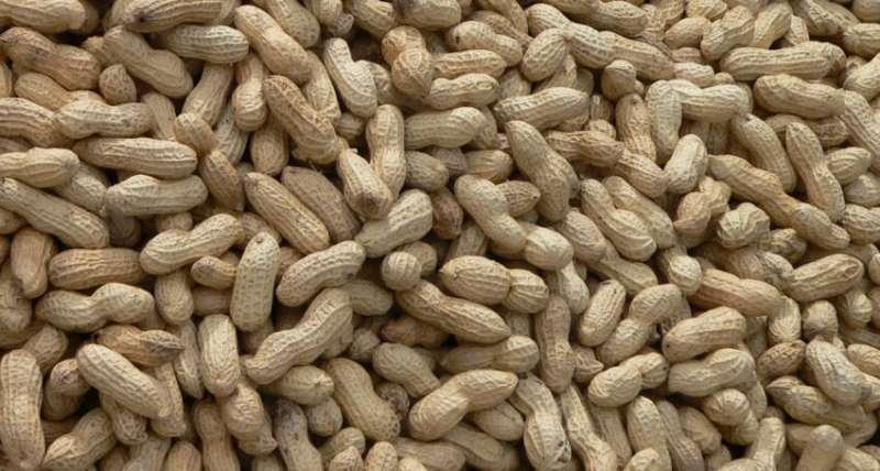 Co-treatments help beat peanut allergies
