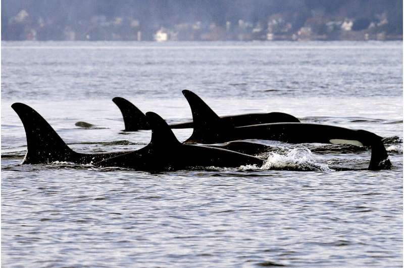 Counting whales from space pitched as key to saving them